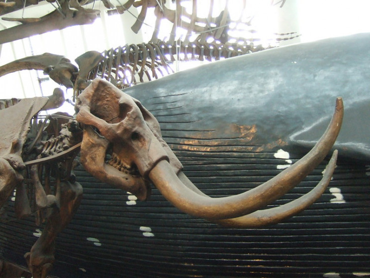 good news mammoth bones