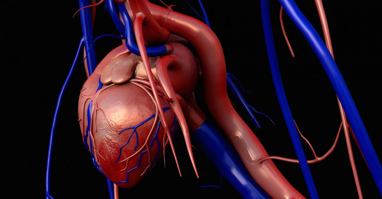 New 'FRESH' Collagen-based 3D Printing to Fix Broken Hearts