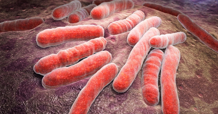 Sleeping with the Enemy: How Waking Good Bacteria Can Help You Fight Infection
