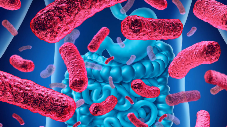 Microbial Wisdom: Your Gut May Predict How Wise and Lonely You Are