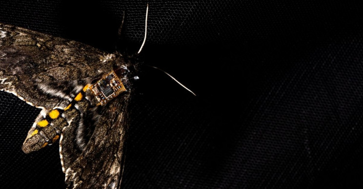 Sensors Reach Destinations on Flying Insects for Science