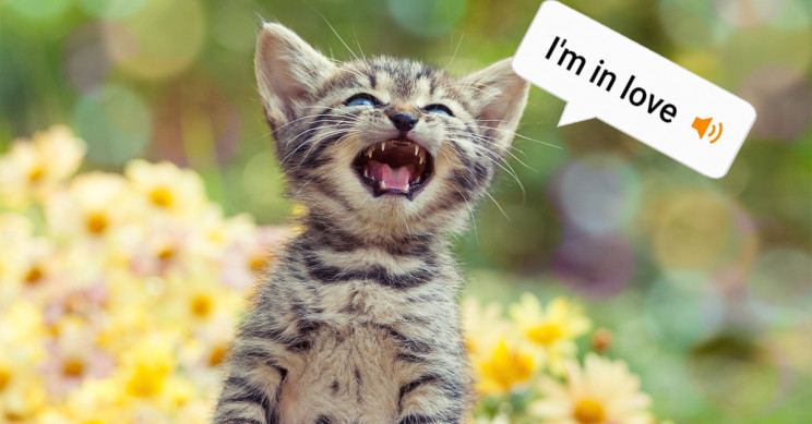 Ex-Amazon Engineer Designs App that Reportedly Translates Cat Meows