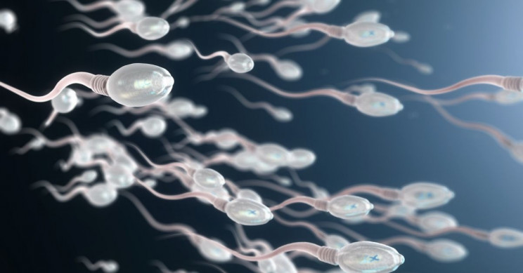 Competitive Sperm Swim Faster and Poison Peers