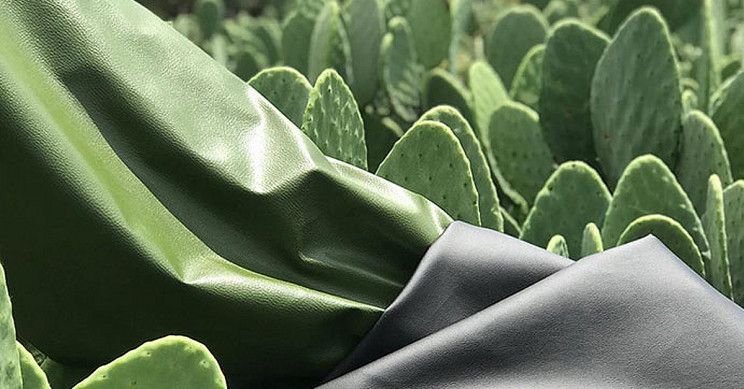 Creating Leather From Cactus to Save Animals and the Environment