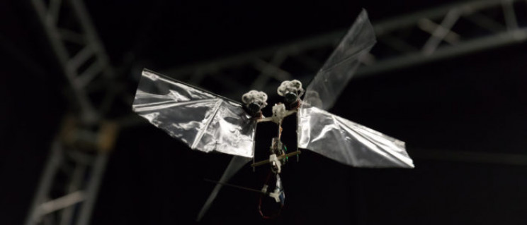 smallest camera delfly