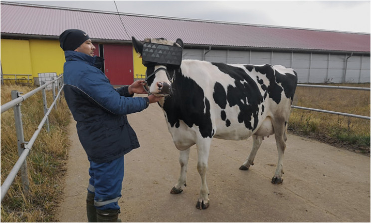 Need Your Cows to Produce More Milk? Try a VR Headset