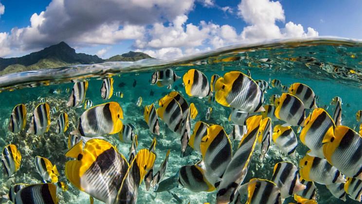 Mass Extinction Alert: Global Warming Pushes Tropical Fish Away