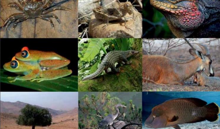 species lifespans species