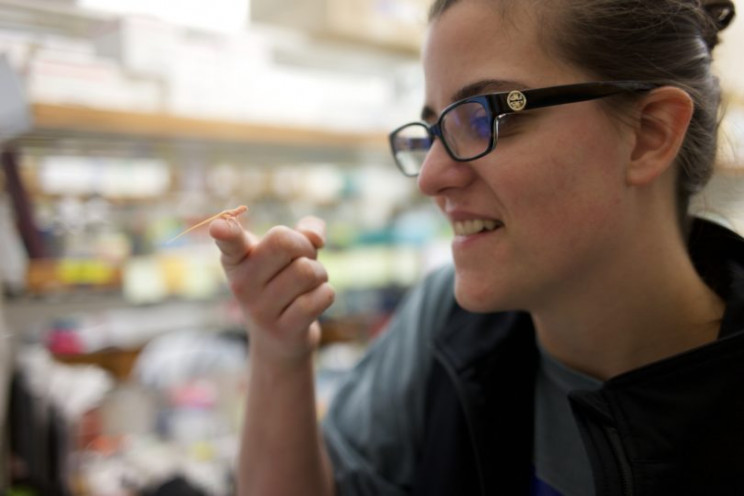 Scientists Create the World's First Gene-Edited Albino Lizards Using CRISPR