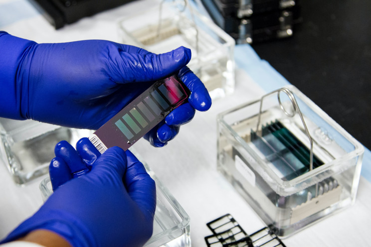 A lab technician with blue gloves hold's a strip of material with DNA sequencing information on it.