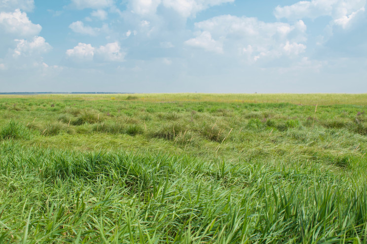 Short, green grasses cover a large field in Russia