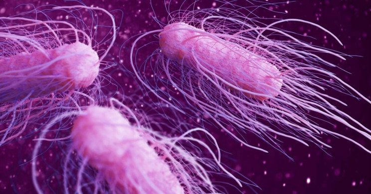 Kamikaze Bacteria: Dying Bacteria Self-Sacrifice to Save their Colony