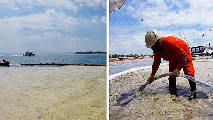 'Sea Snot' Has Invaded Turkey's Shores. Here's What Should Be Done To Fight It