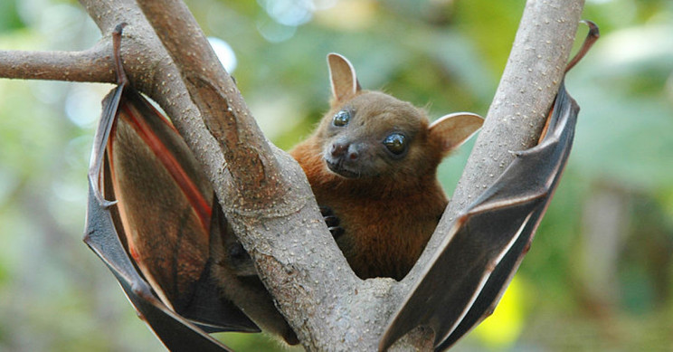 Bat-Borne Issyk-Kul Virus Detected in Europe for the First Time