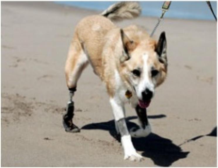 prosthetic limbs cassidy