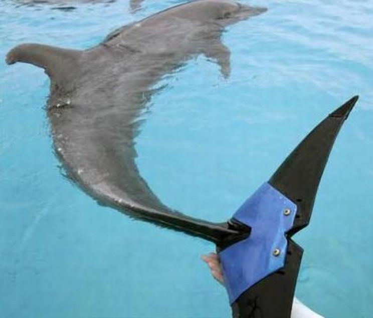 animal prosthetics dolphin