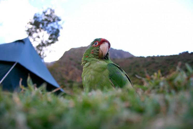 animal prosthetics parakeet