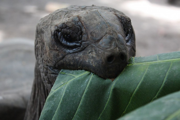animal prosthetics tortoise