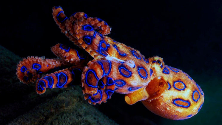 TikToker Unknowingly Holds The World's Deadliest Octopus