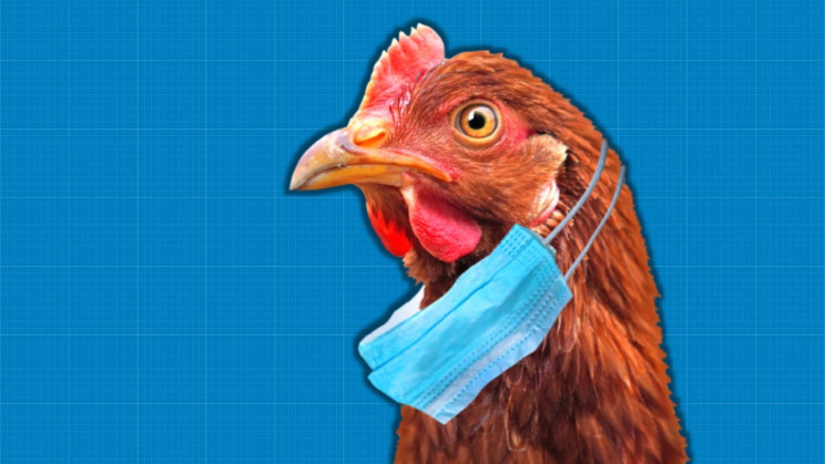 China Confirms First Human Infection of H10N3 Bird Flu