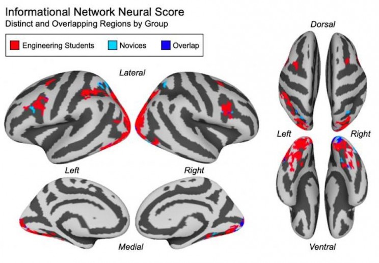 Researchers Can Use Brain Activity to Measure How Well You Understand a Concept