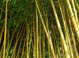 Bamboo as a Replacement to Steel