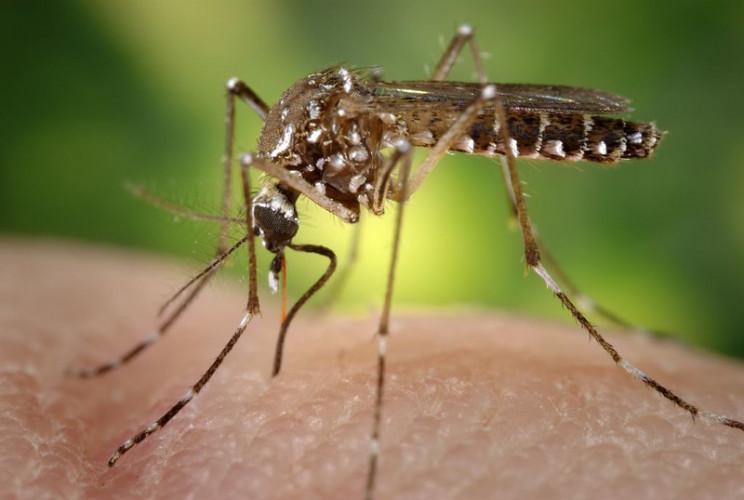 myths about coronavirus mosquito