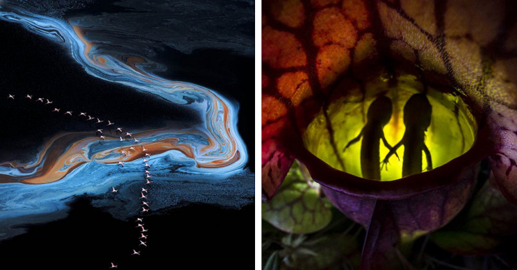 13+ Must-See Photographs From Nature Photographer of the Year 2020