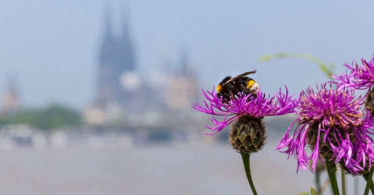 Mobile Networks Are Affecting Insect Populations, Study Says