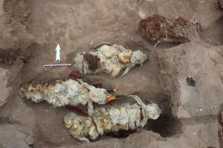 500-Year-Old Mummified Inca Llamas Discovered in Peru