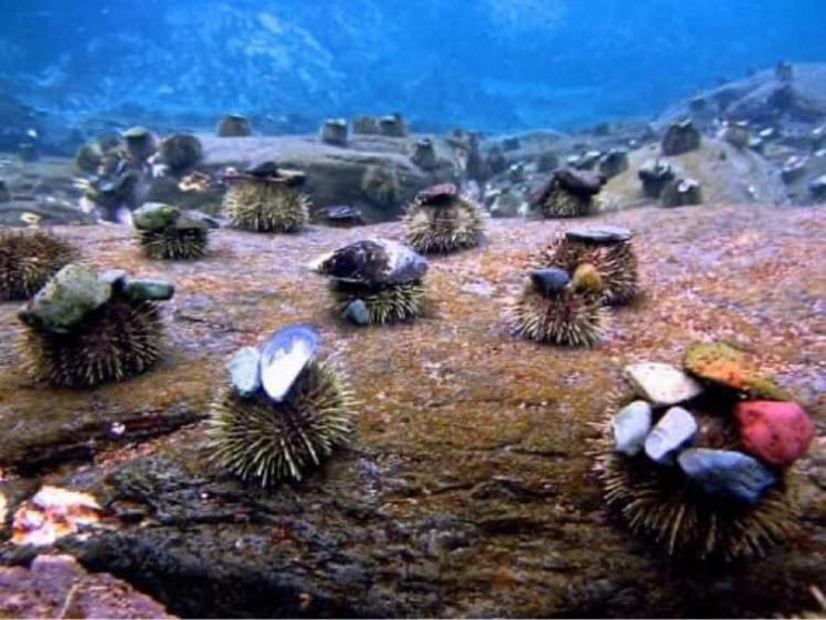 Sea Urchins Love Hats, So Couple 3D Prints Cowboy Hats for Them