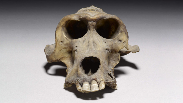 3,300-Year-Old Baboon Skull Leads Researchers to Ancient Kingdom