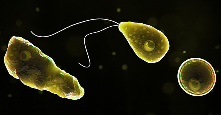 Rare Brain-Destroying Amoeba Case Confirmed in Florida