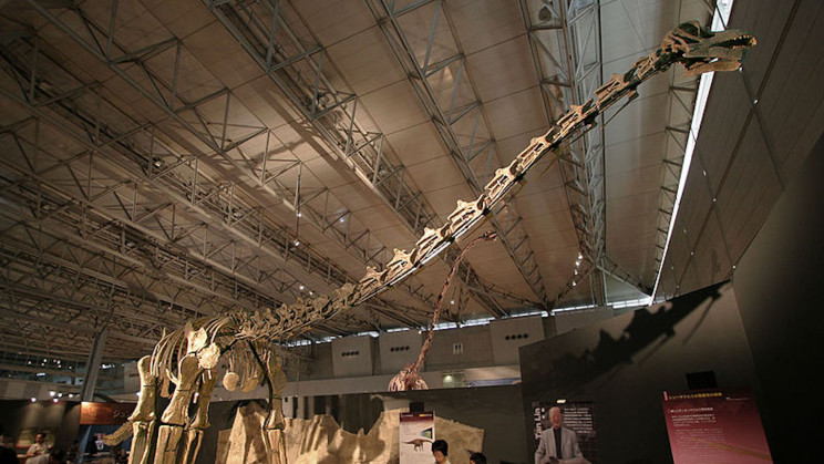 Scientists Unearth Fossils of What May Be the World's Oldest Titanosaur
