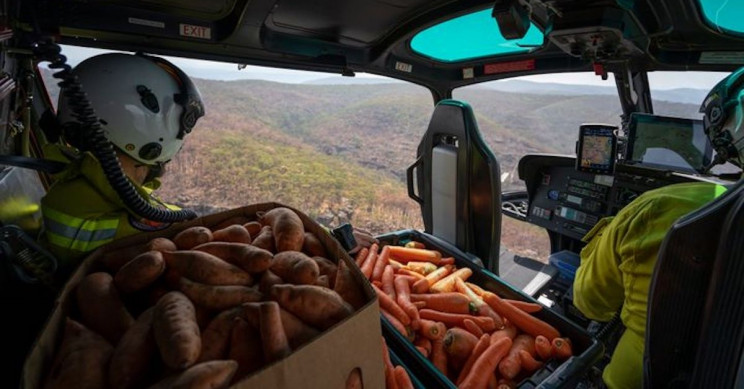 Food Airdropped on Bushfire Ravaged Australia to Save Animals from Starvation