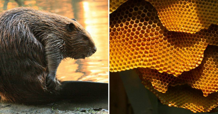 The Most Fascinating Engineers of the Animal Kingdom