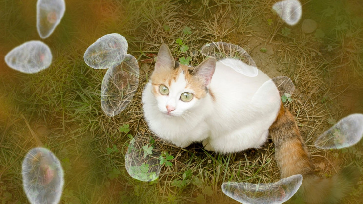 Toxoplasmosis: The Cat Poop Parasite That's Probably in Your Brain