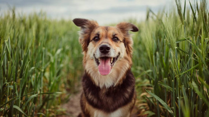 New Study Reveals How Old Your Dog Actually Is According to Human Years