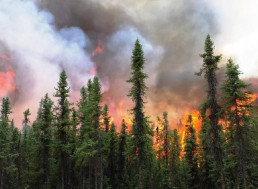 Arctic Wildfires and Their Effects on Our Planet