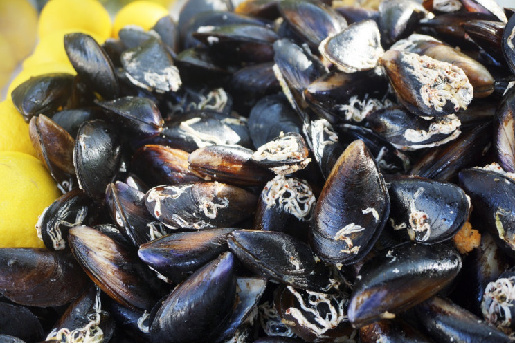 Mussels Inspire Research to Clean Oil Spills, Contaminated Water
