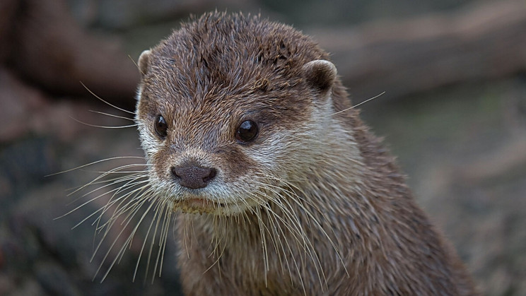 Now Otters Test Positive for COVID-19 in Georgia
