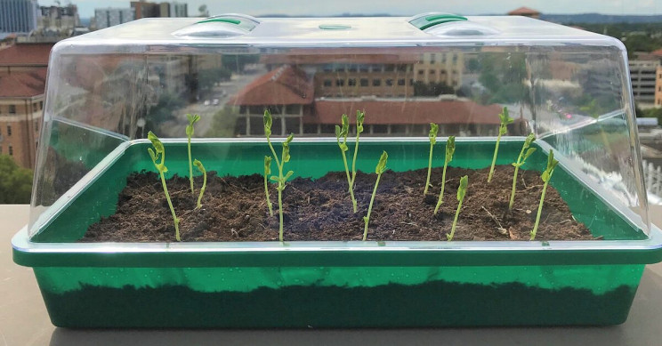 Engineers Create Self-Watering Soil That May Revolutionize Farming