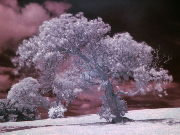 Tree in near-infrared