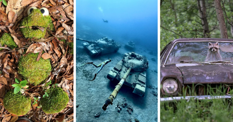 19 Stunning Images of Abandoned Things Being Reclaimed by Nature