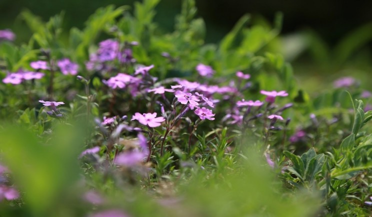 Plants Becoming Extinct at a Rapid Rate