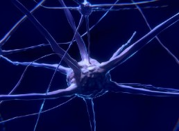 'Mindreading' Neurons Allow Us To Predict Others' Behaviors