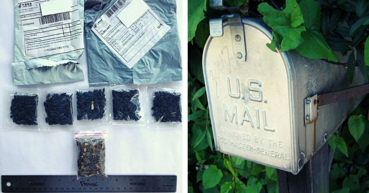 Curious Seeds Disguised as Jewelry Packages From China Showing Up in US Mail