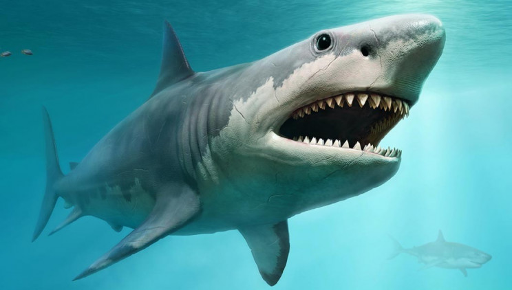 Scientists Determine Just How Large Ancient Shark Megalodon Really Was