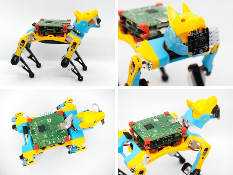 Meet Petoi Bittle: The Future of Robotic Pets