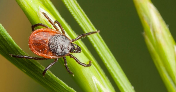 Tick Saliva Proteins Created by Scientists for the First Time